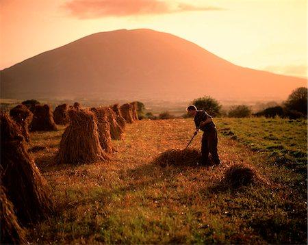 farmer in the morning field
