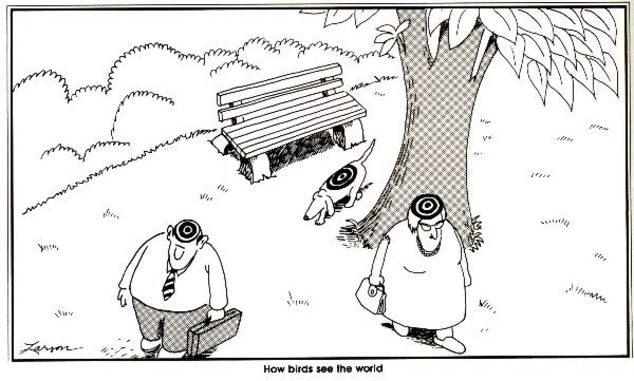 Far Side cartoon How birds see the world