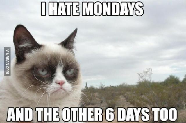 Grumpy-Cat-Memes-01