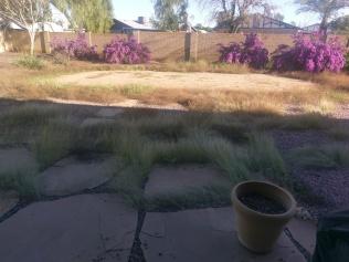 Damned grass.
